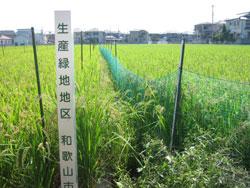 生産緑地指定の稲穂